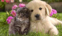 Sterilizacija psice in mačke